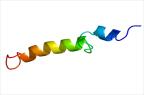 La parathormone est une hormone peptidique hypercalcémiante et hypophosphatémiante sécrétée par les glandes parathyroïdes (illustration @Emw sur Wikimedia).