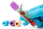 Le séquençage génétique de l'ADN fœtal peut être effectué à partir d'une simple prise de sang de la future mère (illustration).