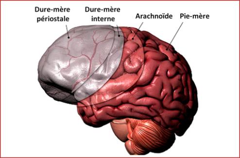 ANDROCUR et génériques (cyprotérone) : point d'information de l'ANSM sur le risque de méningiome