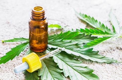 Cannabis thérapeutique : vers une expérimentation de l'usage dans 5 indications