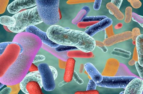 Transplantation de microbiote fécal et COVID-19 : la collecte et la réalisation des préparations reprennent sous conditions