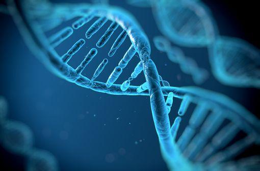 CRISPR-Cas9, un outil de modification ciblée du génome extrêmement précis (illustration)
