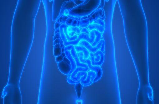Maladie inflammatoire chronique de l'intestin(MICI), lamaladie de Crohn estle plus souvent retrouvée au niveau de l'iléonet ducôlon (illustration).