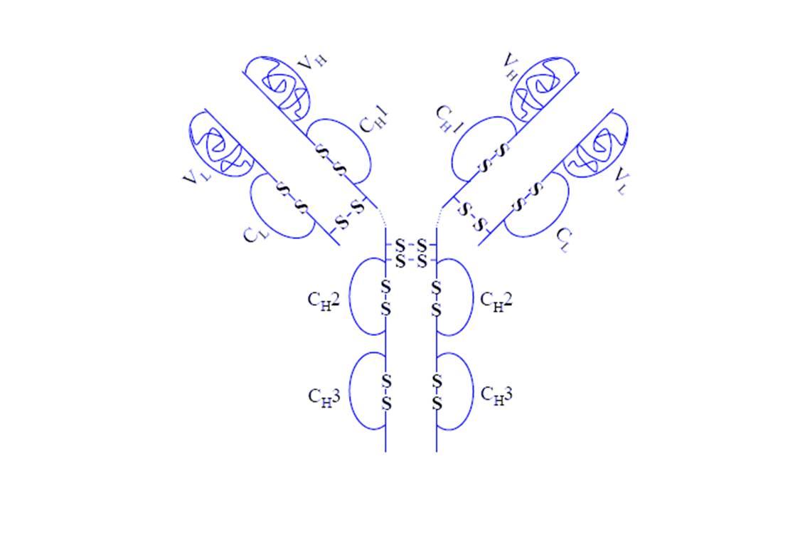 Structure de l'adalimumab (@ Monopol, Wikimedia)