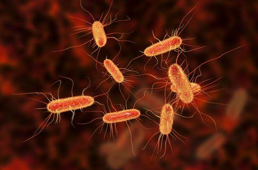 Représentation en 3D de bacilles Escherichia coli, bactéries à Gram négatif habituellement sensibles au cotrimoxazole (illustration).