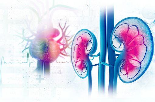 L'acide mycophénolique est un immunosuppresseur sélectif utilisé dans la prise en charge de greffes rénales, hépatiques ou cardiaques.