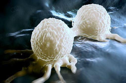 Le cisplatine agit en inhibant la réplication de l'ADN et en induisant la mort cellulaire préférentielle des cellules cancéreuses (illustration).