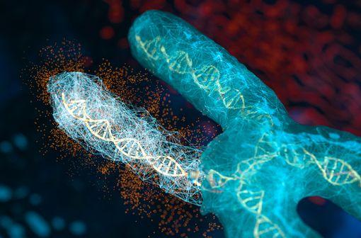 L'hypophosphatémie liée à l'X est associée à une mutation de la séquence du gène PHEX situé sur le chromosome X (illustration).
