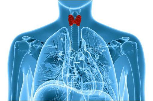 Représentation anatomique de la thyroïde (illustration).
