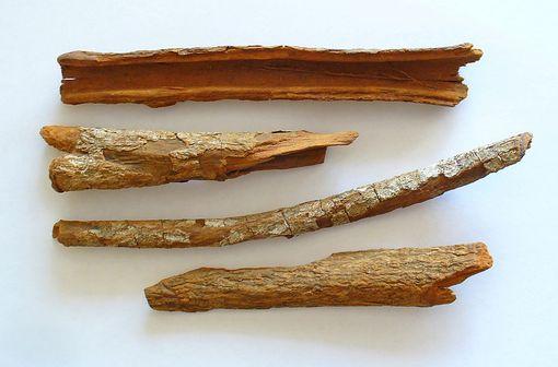 Écorces de quinquina : Cinchona officinalis (illustration @H. Zell sur Wikimedia).