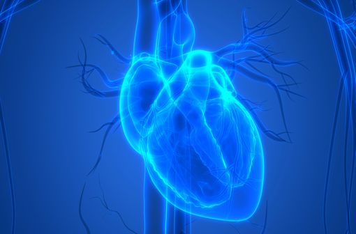 Attention aux pathologies cardiovasculaires !