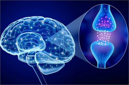 Le tableau clinique de la maladie de Parkinson est la conséquence de la perte de neurones du locus niger (ou « substance noire ») et d'une atteinte des faisceaux nigro-striés (illustration).