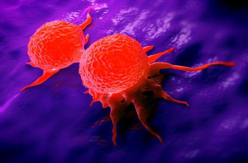 L'étoposide inhibe l'entrée en mitose (prophase) des cellules tumorales (illustration).