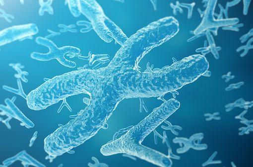 L'hémophilie A résulte d'une mutation du gène F8 du locus q28 du chromosome X codant le facteur VIII de coagulation (illustration).