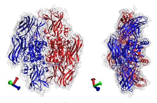 Egalement nommé facteur Laki-Lorand, le facteur XIII est une enzyme de la coagulation sanguine qui ramifie la fibrine (illustration).