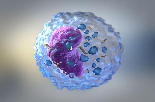 FLUDARABINE TEVA est indiqué dans le traitement de la leucémie lymphoïde chronique (LLC) à cellules B chez les patients ayant des réserves médullaires suffisantes (illustration).