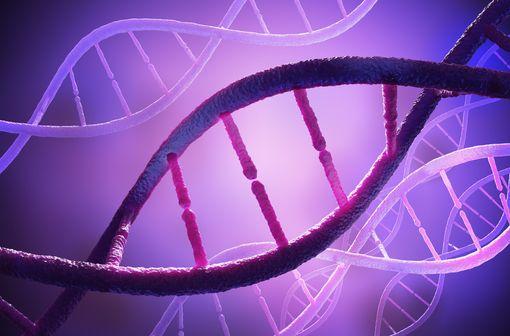 Incorporés dans l'ADN et l'ARN des cellules, les métabolites du fluorouracile induisent l'arrêt du cycle cellulaire et l'apoptose (illustration).