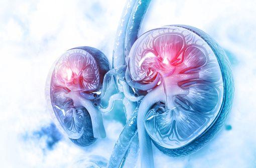 La dapagliflozine réduit la réabsorption rénale du glucose et favorise son excrétion urinaire, de façon indépendante de la sécrétion et de l'action de l'insuline (illustration).