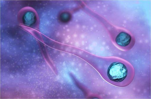 Bacille de Nicolaïer, ou Clostridium tetani, bactérie responsable du tétanos chez l\'homme (illustration).