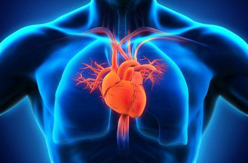 La surveillance cardiaque des patients traités par trastuzumab repose sur la mesure de la FEVG par un échocardiogramme ou une scintigraphie cardiaque (illustration).