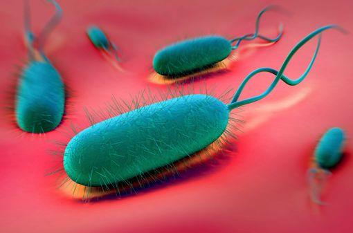 Helicobacter pylori (illustration)