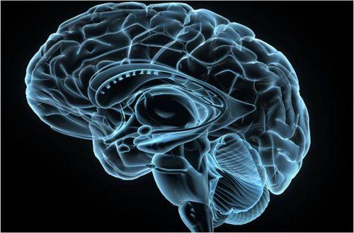 Le terme encéphalopathie désigne toute affection de l'encéphale, qu'elle soit d'origine toxique, dégénérative ou métabolique (illustration).