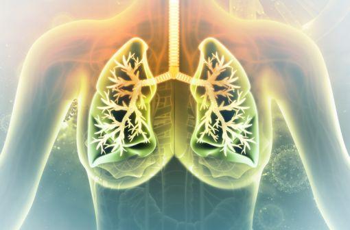 En pneumologie, l'acétylcystéine exerce son action sur la phase gel du mucus et favorise ainsi l'expectoration (illustration).