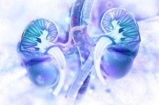 En inhibant le SGLT2 fortement exprimé dans les reins, l'empagliflozine diminue la réabsorption rénale du glucose et augmente son excrétion urinaire (illustration).