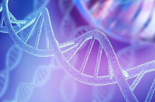 La fièvre méditerranéenne familiale est une maladie génétique, incurable, rare, auto-inflammatoire (illustration).