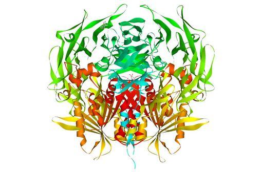 Diagramme en ruban de la dipeptidyl peptidase-4 humaine (illustration @ Wikimedia).