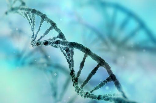 L'alpha-mannosidose est une maladie lysosomale due à une mutation du gène MAN2B1 situé au niveau du chromosome 19 et codant l'enzyme alpha-mannosidase (illustration).