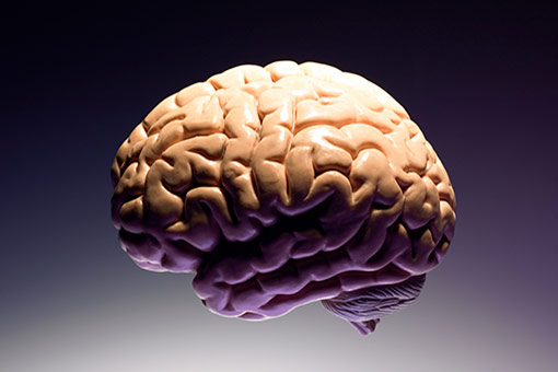 Le méningiome est une tumeur, le plus souvent bénigne, qui se développe à partir des méninges (illustration)