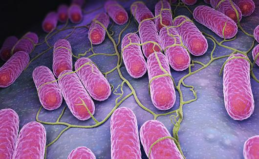Préparations infantiles et risque de contamination par Salmonella agona : 700 références suspendues