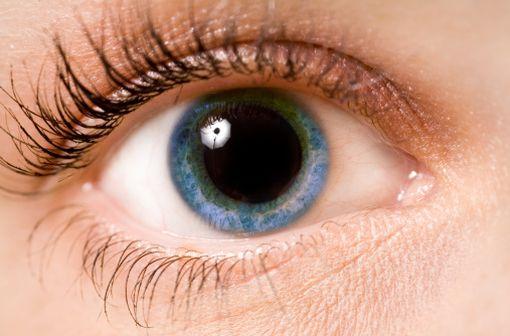 MYDRIATICUM est indiqué pour obtenir une mydriase à but diagnostic (fond d'œil) ou thérapeutique (illustration).