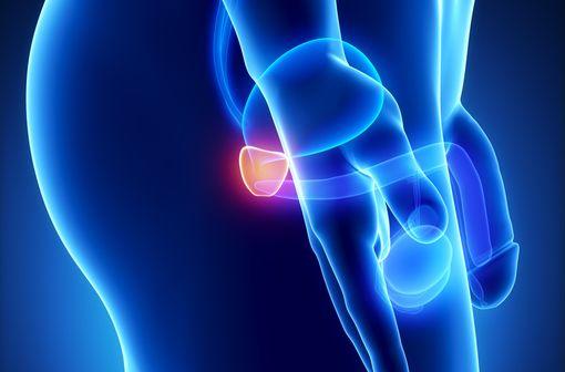Représentation anatomique de la prostate (illustration).