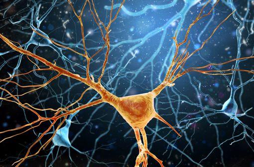 La pathologie neurologique au cours de la COVID-19 de mieux en mieux connue (illustration).