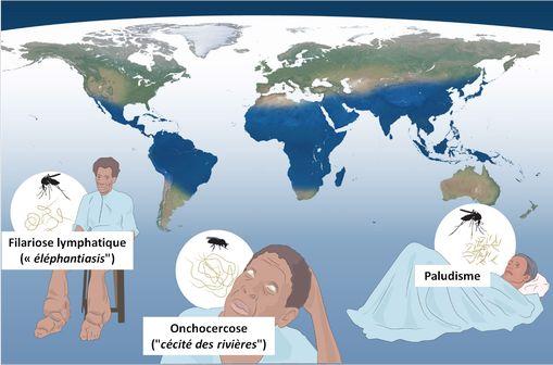 Le Prix Nobel de médecine 2015 récompense trois chercheurs ayant permis des avancées décisives sur le traitement de trois des pires maladies tropicales, le paludisme, la cécité des rivières et l'éléphantiasis.
