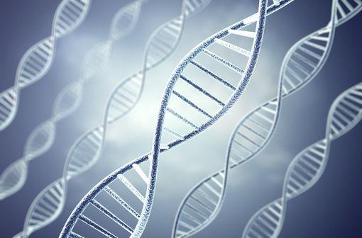 La tyrosinémie de type I est une maladie héréditaire liée au défaut de catabolisme de la tyrosine (illustration).