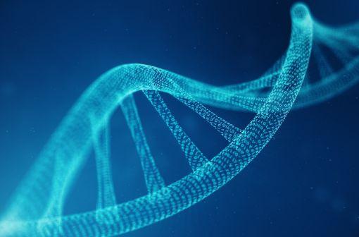 La mutation F508del du gène CFTR expose à une forme relativement sévère de mucoviscidose (illlustration).