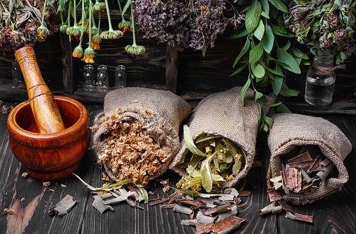La phytothérapie désigne la médecine fondée sur les extraits de plantes et les principes actifs naturels (illustration).