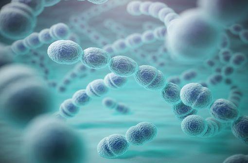 Représentation en 3D de Streptococcus pneumoniae (illustration).
