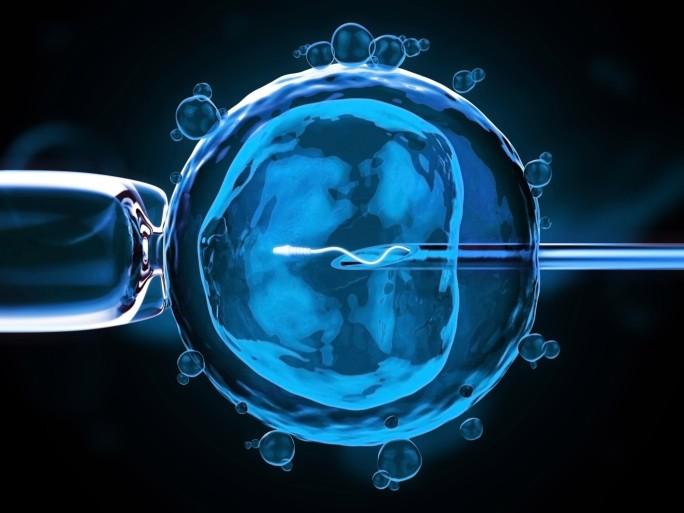 L'assistance médicale à la procréation (AMP) consiste à manipuler un ovule et/ou un spermatozoïde pour procéder à une fécondation (illustration).