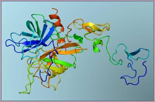 Structure tertiaire de la protéine C activée humaine (illustration @Emw sur Wikimedia).