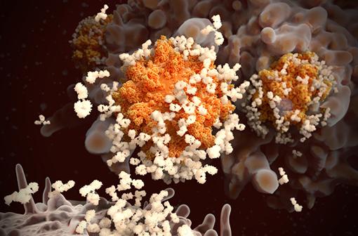 Quel risque de formes sévères de COVID-19 après une vaccination contre cette infection à coronavirus ? (illustration).