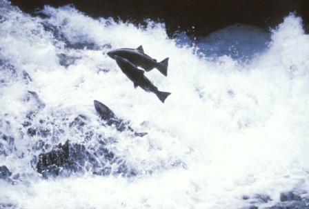 Chaque capsule de LERO RUTILYS contient 250 mg d'huile de poissons sauvages;