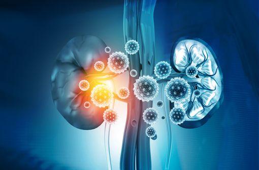 De nombreuses infections virales sont responsables d'atteintes rénales (illustration).