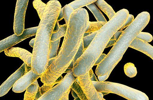 Representation en 3D de Mycobacterium tuberculosis ou bacilles de Koch, la bactérie responsable de la tuberculose (illustration).