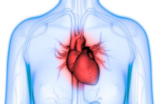 RISORDAN est un vasodilatateur qui agit par relaxation des fibres musculaires lisses vasculaires (illustration).