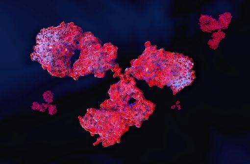 Le tocilizumab est un anticorps monoclonal dirigé contre les récepteurs de l'interleukine 6 qui jouent un rôle dans l'apparition de l'inflammation et est présente à des taux élevés chez les patients atteints de polyarthrite rhumatoïde (illustration).