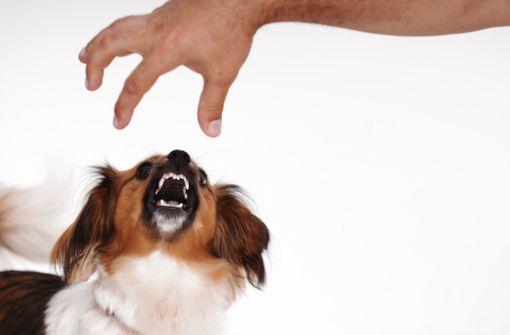 Le chien reste la principale source d'exposition au risque rabique en France (source : Pasteur.fr)